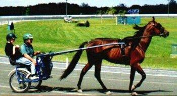 Beau tại Ocean Downs Raceway